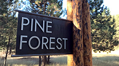 Pine Forest Owners   Association